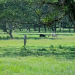 Cattle Property