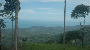 2 Acre Ocean View Home Site In The Mountains Above Punta Mala