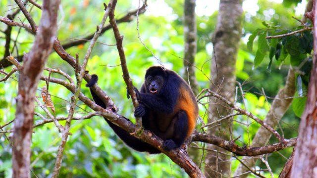 Rainforest Property