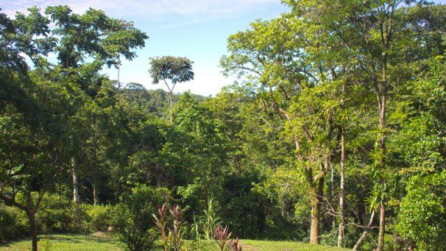 Lush Rainforest Setting