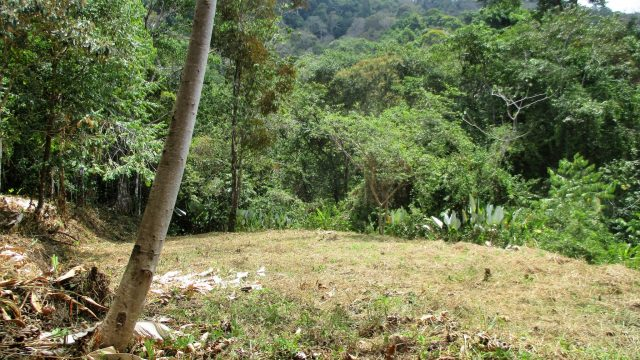 Land Parcel Dominicalito