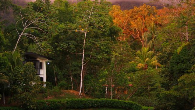 Rainforest Studio In Uvita