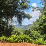Land with Multiple Home Sites in Costa Rica