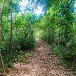 Nature Hiking Trails