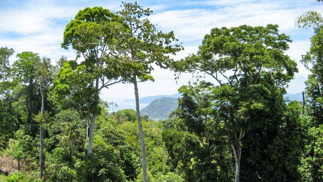 Private Rainforest Zones
