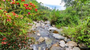 Paradise Mountain Ranch with Brisk Climate and Rich Biodiversity