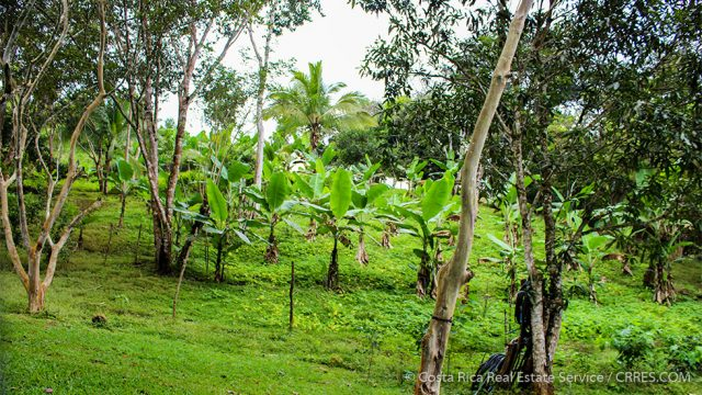 Tropical Fruit Trees