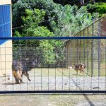 Fenced Yard Perfect for Pet Owners