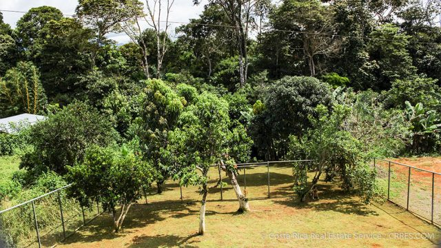 Organic Fruit Orchard