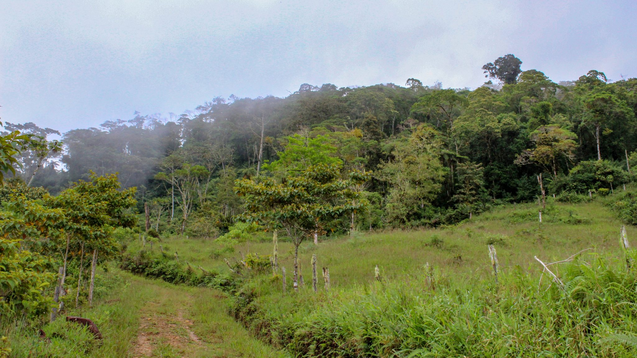 Cloud-Forest-Farm-Preservation (7 of 16)