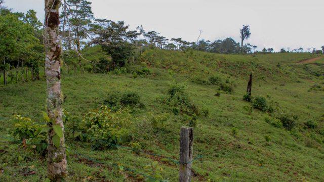 Open Pastures