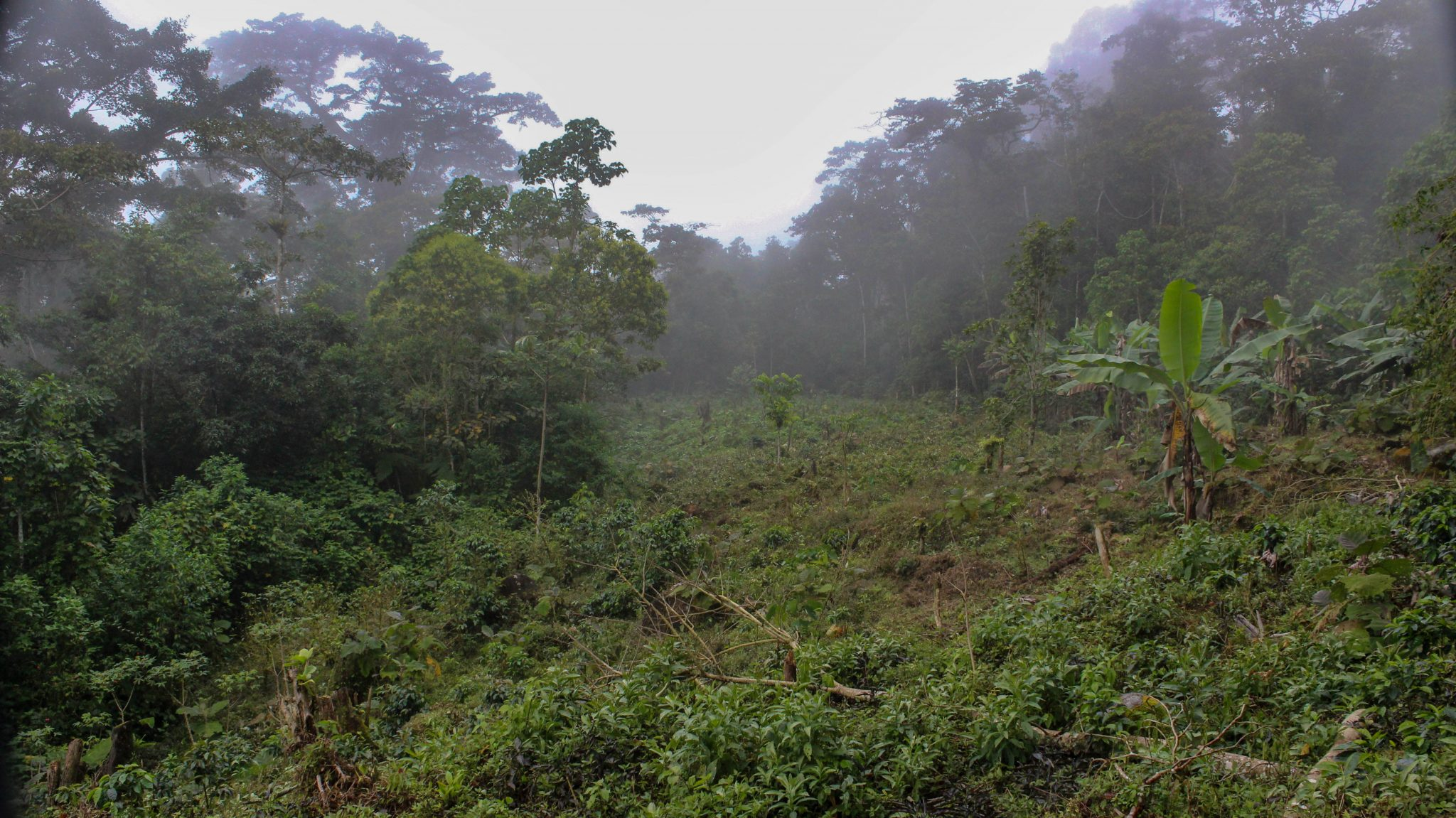 Cloud-Forest-Farm-Preservation (9 of 16)