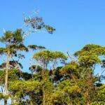 Pristine Tropical Preserve