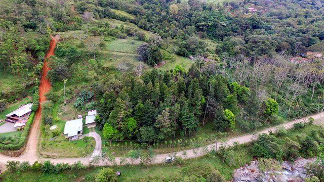 Reforestation Zone