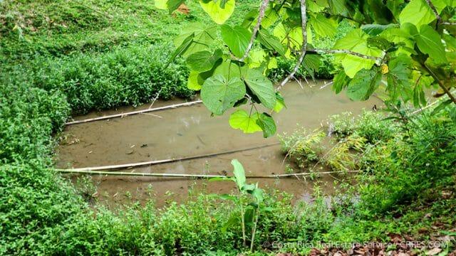 Tilapia Ponds