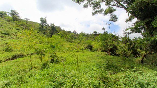 Fertile Land for Crops
