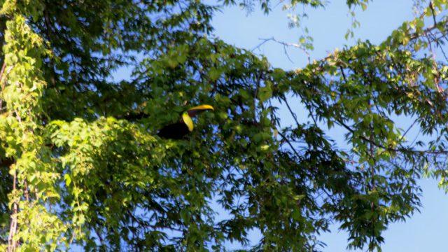 Birds Sighting