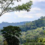 Lush Rainforest Areas