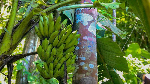 Organic Fruit Trees