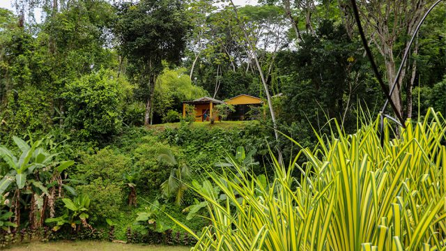 Rainforest Setting