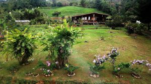 Mountain Home with Organic Orchards and Waterfalls near Chirripo