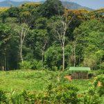 7-Acre Property in Platanillo