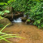 Freshwater Creek
