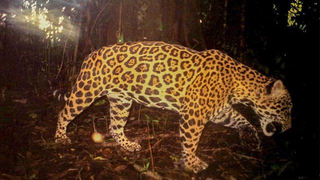 Amazing Wildlife