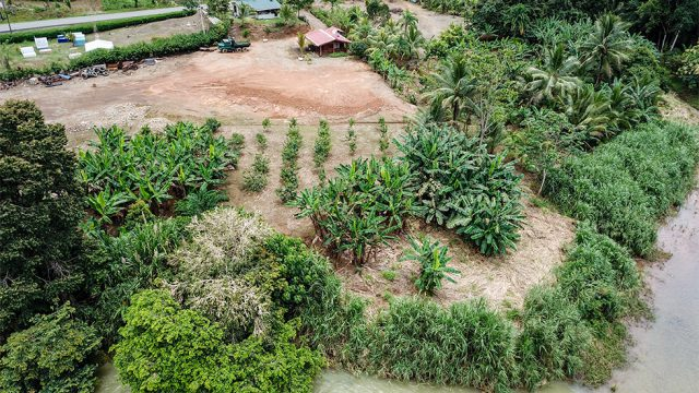 Planted with Fruit Trees