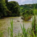 Baru River Views