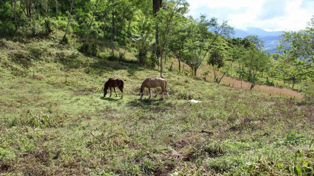 Horse Ranching Property in Costa Rica