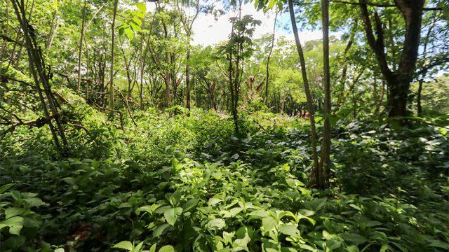 Subdividable Land in Uvita