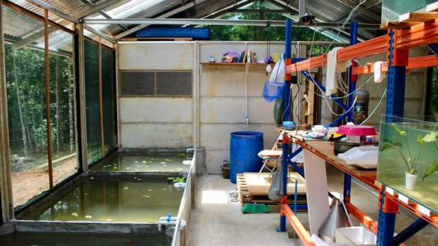 Fish Farming Nursery