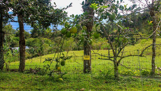 Abundant Fruiting Trees