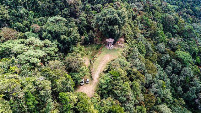 Jungle Landscape Privacy