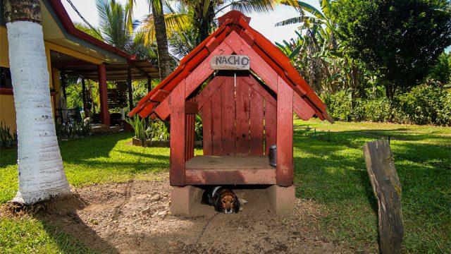 2 Large Dog Houses