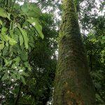 Old Growth Rainforest