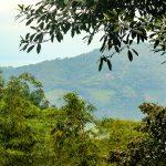 Jungle & Mountain View