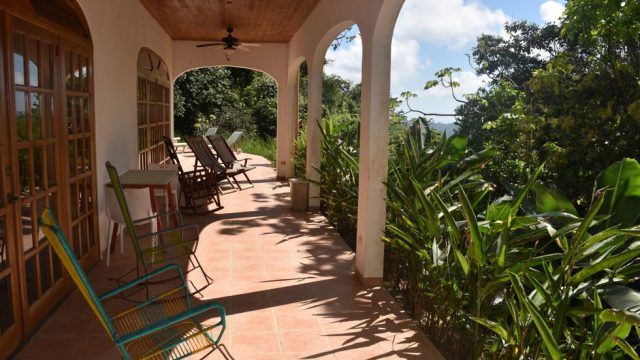Wide Jungle Views