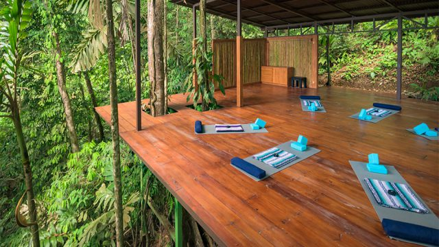 Jungle Yoga Platform