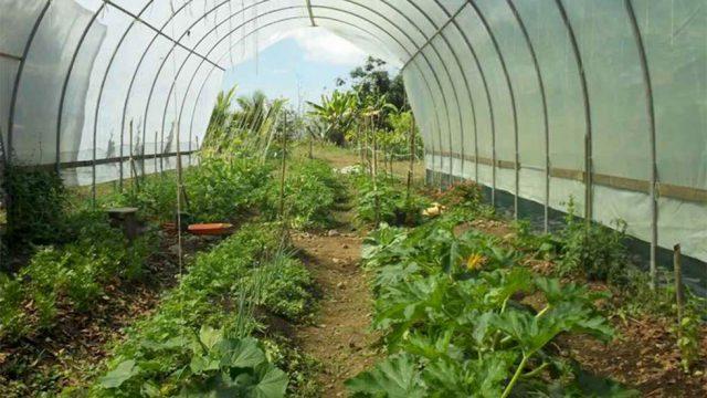 Fuente Verde Organic Farm Community