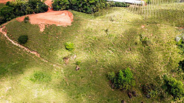 Lush Land for Farming