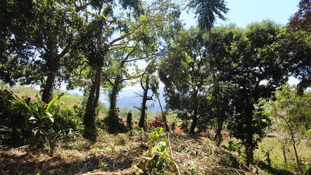 0.85-Acre Property in Uvita