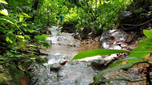 Own 245 Acres In Southern Costa Rica with Palm Oil and Harvestable Trees