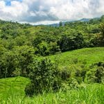 192 Acres Near Hatillo