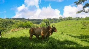 139 Acre Cattle Ranch with Riverfrontage Near San Salvador
