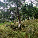 Fertile Soil for Gardening