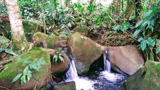 Year-Round Freshwater Creek