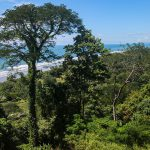 Premier Land Parcel for Sale in Dominical