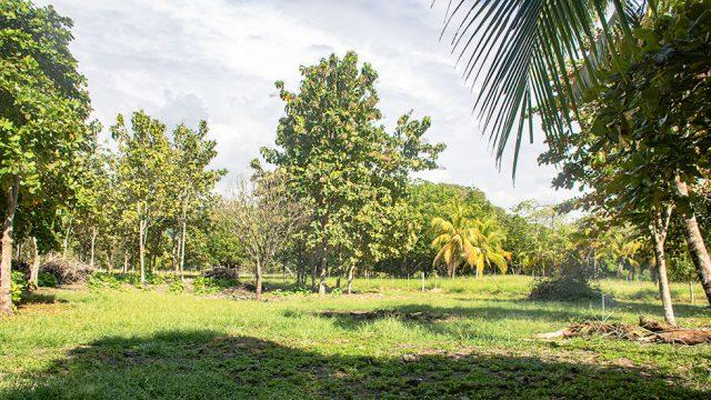 1.25-2.5 Acres Near Quepos